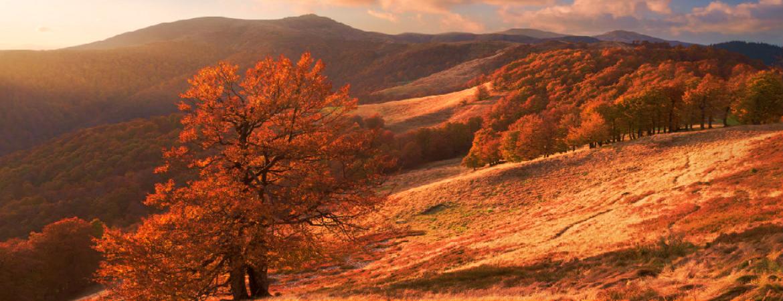 Осенний отдых в Карпатах